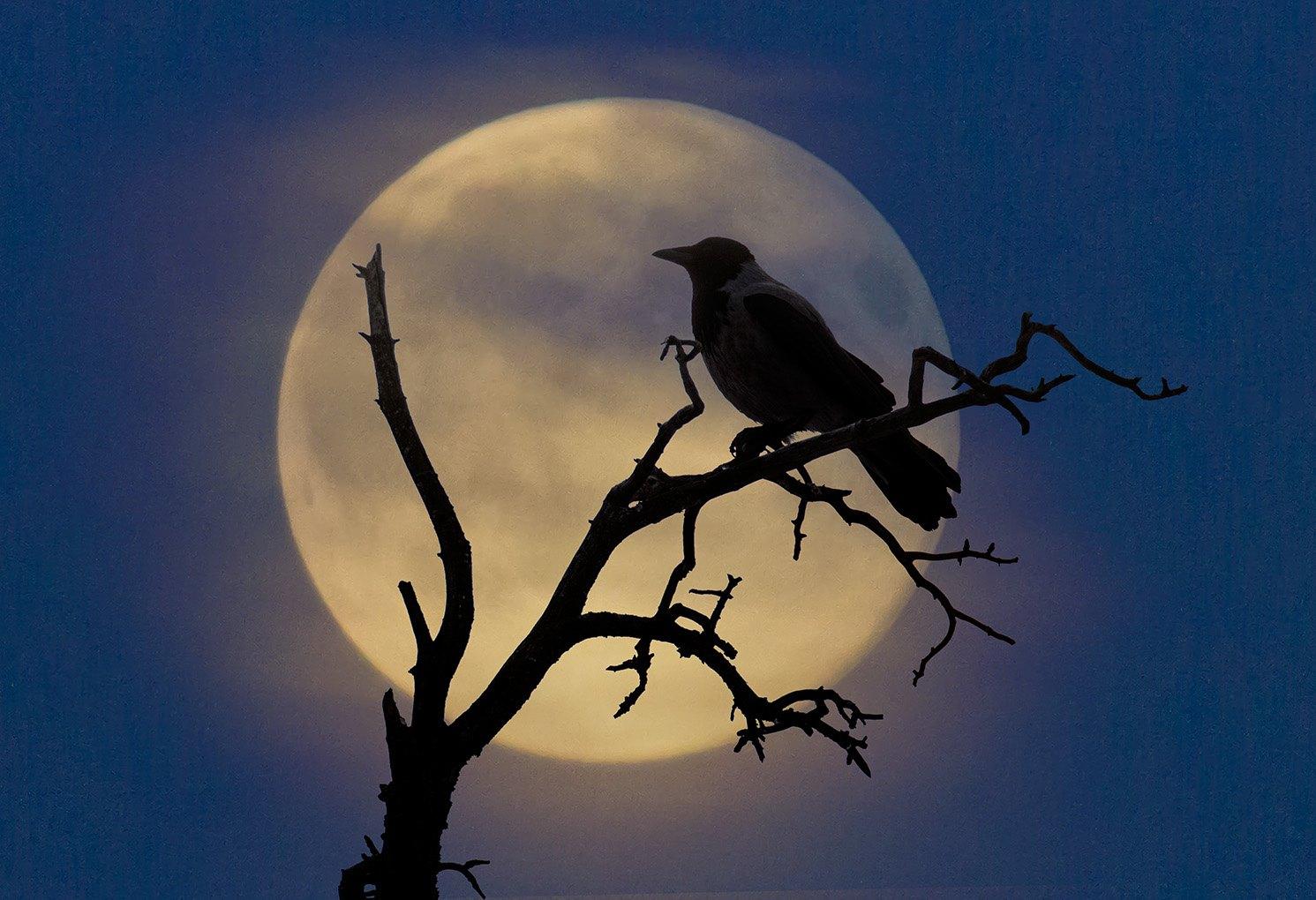 отмечают недостаточный картинка ворон на фоне луны коробки главными