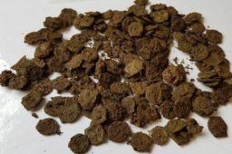 Découverte d'un trésor de potins gaulois de Marseille à l'ouest de Londres
